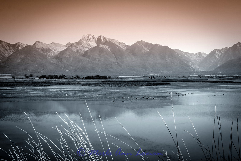 Mission Mountains from Ninepipe NWR - B&W