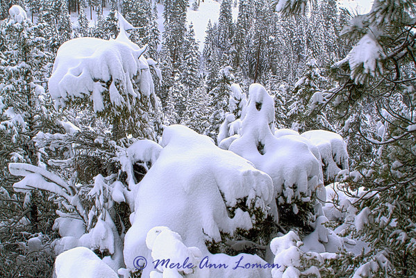 Snow ghosts in the Bitterroot Mountains