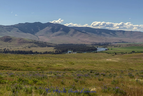 Flathead River near Dixon. Lupine is blooming IMG_8563 ¯\_(ツ)_/¯ Please share and like the A Montana View Facebook page! Thanks so much for viewing.   visit www.amontanaview.com   #Photography #Montana #MontanaMoment  #FlatheadRiver - Buy this photo at this link http://smu.gs/1dXU7iu
