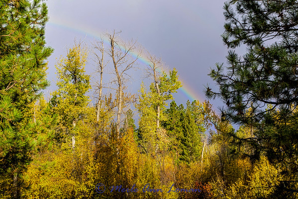 Rainbow over Bear Creek west of Victor IMG_9321 ¯\_(ツ)_/¯ Please share and like the A Montana View Facebook page! Thanks so much for viewing.   visit www.amontanaview.com   #Photography #Montana #MontanaMoment #BaldEagle- Buy this photo at this link http://smu.gs/1k8p4U2